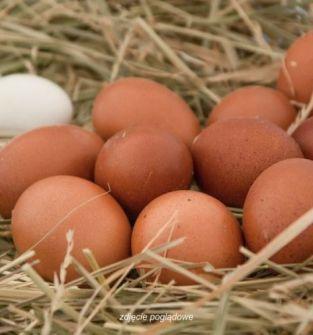 Jajka świeże od kur z wolnego wybiegu