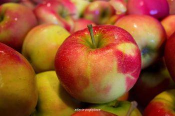 Jabłka ekologiczne